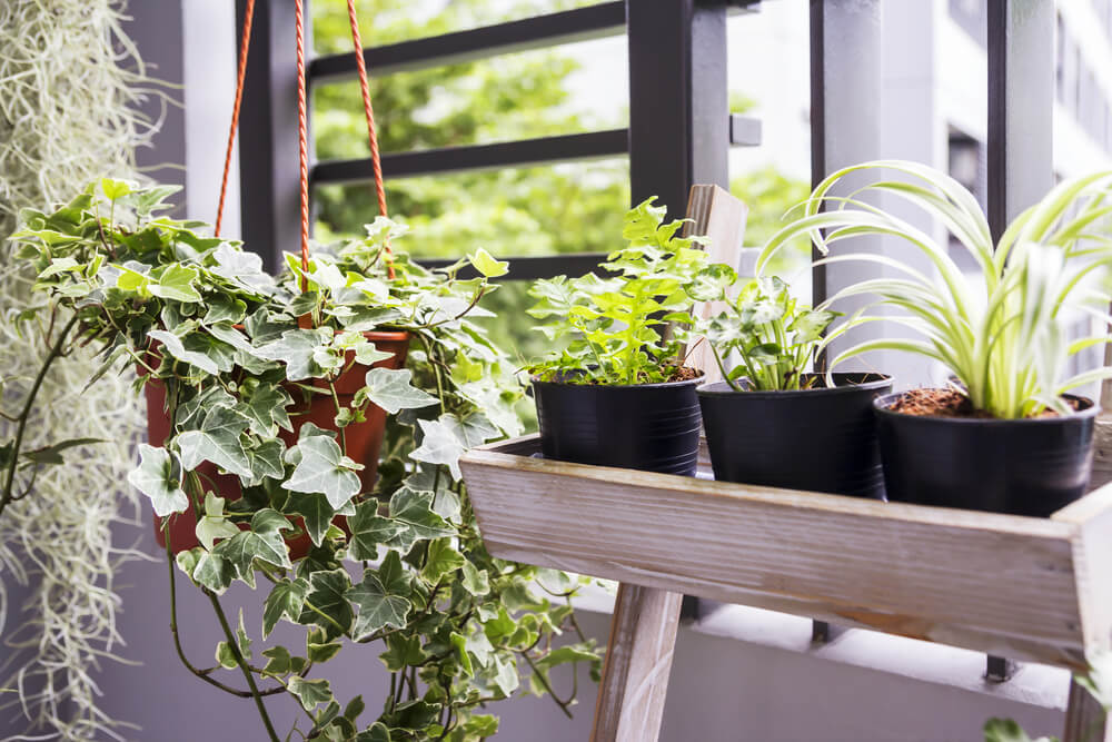 plants growing inside of an apartment