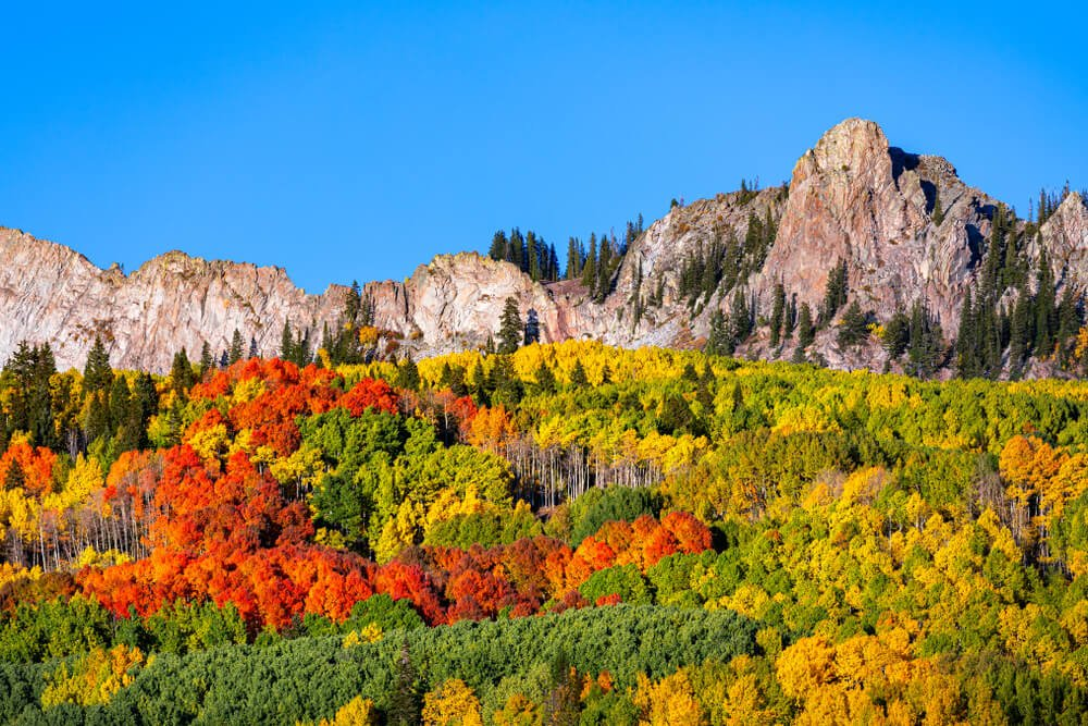 rocky mountains with aspen trees changing colors in the fall